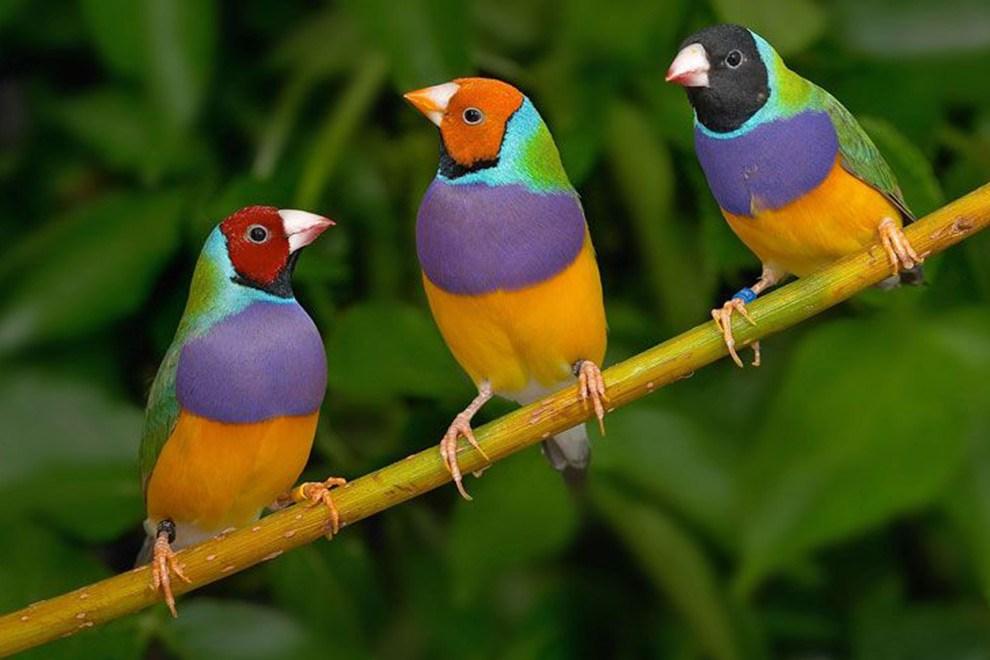 Tekrarlı Tahsilat, E-Fatura, Ön Muhasebe – 1 Taşta 3 Kuş